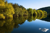Riverbank tree line and river reflection — Stock Photo