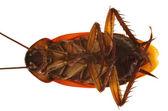 Resumen de cuerpo de cucaracha — Foto de Stock
