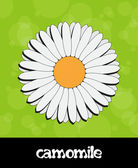 Vector summer background with flower (camomile) — Stock Photo
