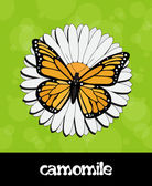 Vector summer background with flower and butterfly — Stock Photo