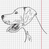 Drawing of a dog (English pointer), vector — Stock Photo