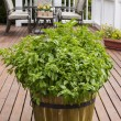 Home Garden Herbs on Outdoor Patio — Stock Photo