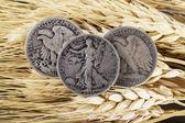 Silver Half Dollars on Wheat Stalk — Stock Photo