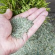 Holding New Grass Seed in Palm — Stock Photo