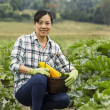Mature women kneeling in vegetable Garden — Stock Photo
