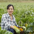 Mature women with basket of vegetables sitting in Field — Stock Photo