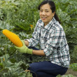 Mature women harvesting vegetables — Stock Photo #13190043