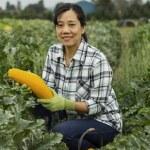 Fall Vegetable Harvest — Stock Photo