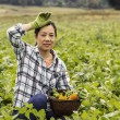 Stock Photo: Mature women resting from harvesting green beans