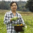 Mature women standing with vegetable basket in field — Stock Photo