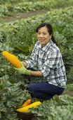 成熟女性收获蔬菜 — 图库照片