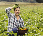 Mature women resting from harvesting green beans — Stock Photo