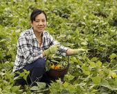 Alegría de la cosecha de verduras — Foto de Stock
