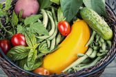 Garden Fresh Vegetable Basket — Stock Photo