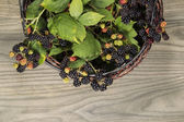 Basket of Seasonal Berries — Stock Photo