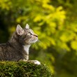 Cat on Top of Tree Hunting - Stock Photo