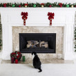 Christmas Kitty — Stock Photo #13698753
