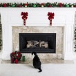 Stock Photo: Christmas Kitty