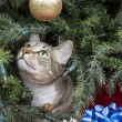 Cat Exploring Christmas Tree — Stock Photo