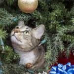 Cat Exploring Christmas Tree — Stock Photo #17363179