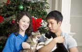 Grumpy Cat during Holidays — Stock Photo