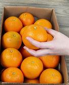 Wybierając owoc pomarańczowy — Zdjęcie stockowe