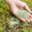 Planting new grass seed to bare spot on yard — Stock Photo