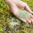 Planting new grass seed to bare spot on yard — Stock Photo #21548019