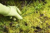 Rimozione di giardino di erba erba muschio — Foto Stock