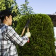 Mature woman Trimming the Hedges near her patio — Stock Photo
