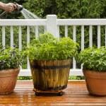 Watering Home Garden — Stock Photo #29243199