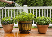 Watering Home Garden — Stock Photo