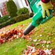 Stock Photo: Electrical Blower Cleaning Leaves from Front Yard during Autumn