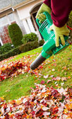 Electrical Blower Cleaning Leaves from Front Yard during Autumn — Stock Photo