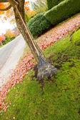Fan Rake leaning on Maple Tree during Autumn Season — Stock Photo
