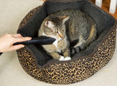 Cleaning pet cat bed — Stock Photo