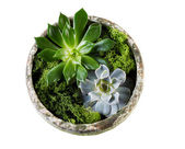 Healthy house plants on White — Stock Photo
