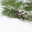 Fir Branch with snow and pine cone — Stock Photo #50182341