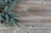Blue Spruce Tree Branch on Rustic Wood  — Stock Photo