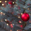 Single Red Ornament hanging from pine tree with glowing lights — Stock Photo #51759339