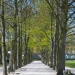 Spring in Bonn — Stock Photo #20133747