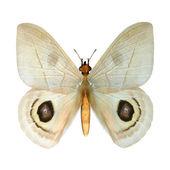 偷窥蝴蝶 — 图库照片