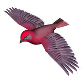 Flying Tanager — Stock Photo
