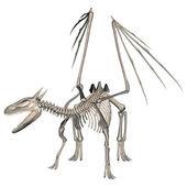 Drachen-skelett — Stockfoto