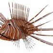 Pterois or Lionfish — Stock Photo