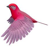 Songbird Tanager — Stock Photo