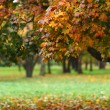 Autumn trees — Stock Photo #12186965