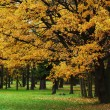 Autumn trees — Stock Photo #12186973