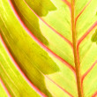Stock Photo: Red leaf