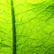 green leaf — Stock Photo